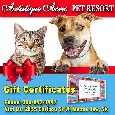 Artisitique Acres Gift Certificate Moose Jaw